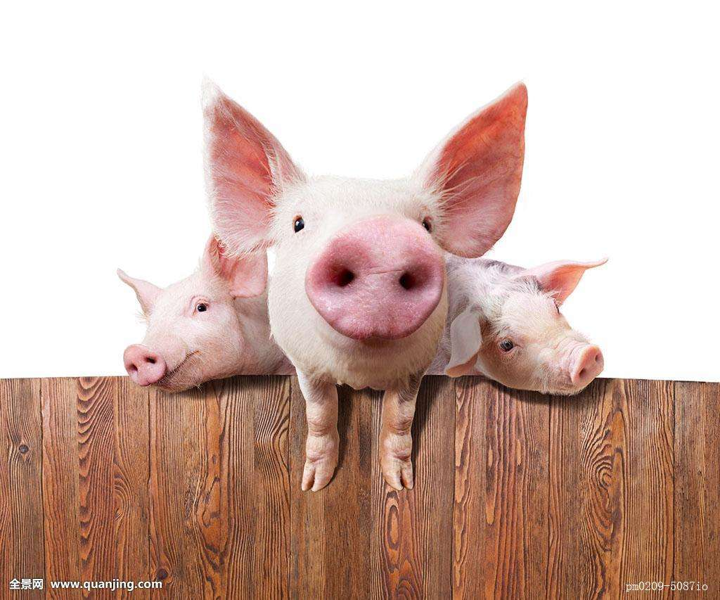 什么样的养猪模式最赚钱?养猪人不可错过的门道!