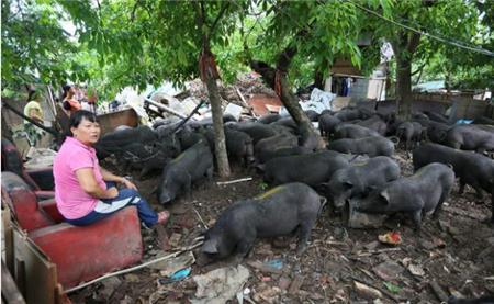 """养殖生态猪?黄菊:搭上电商快车的""""女猪倌""""!"""