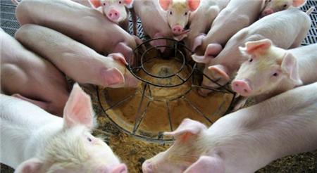 2018猪价连续下跌给养殖户带来重创之际,却让他们渔翁得利!