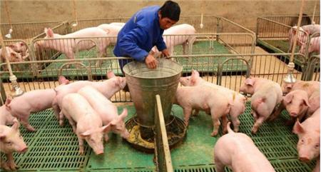 猪价都跌成啥样了,居然还有媒体鼓吹农民工返乡养猪?