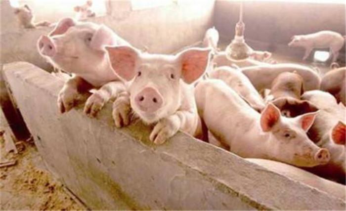 猪价低迷,众人都赔唯他赚,只因做到这一点