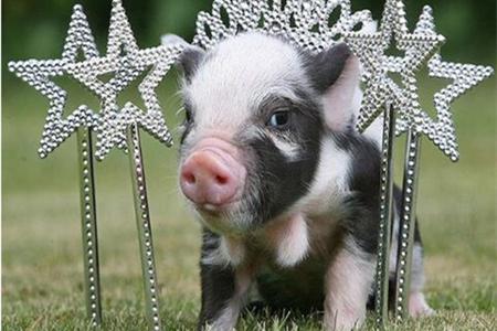 2018年3月12日(20至30公斤)仔猪价格行情走势