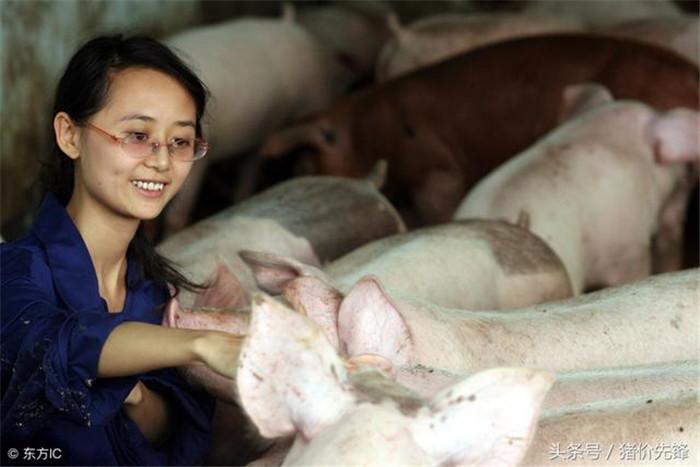 养猪两年女朋友跑了,养猪五年...