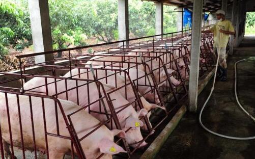 修建猪舍时需要注意的几个问题,新手养殖户看过来!