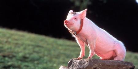 猪价在成本线徘徊,连雏鹰农牧都卖掉部分猪舍?