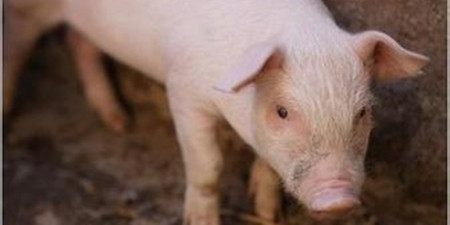 若真似2013年周期变化,养猪人应该怎么做?