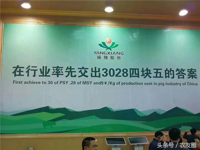 杨翔公司,国内知名的养猪企业。也是广西地区最牛的饲料公司和养殖公司。