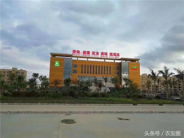 杨翔公司总部图片