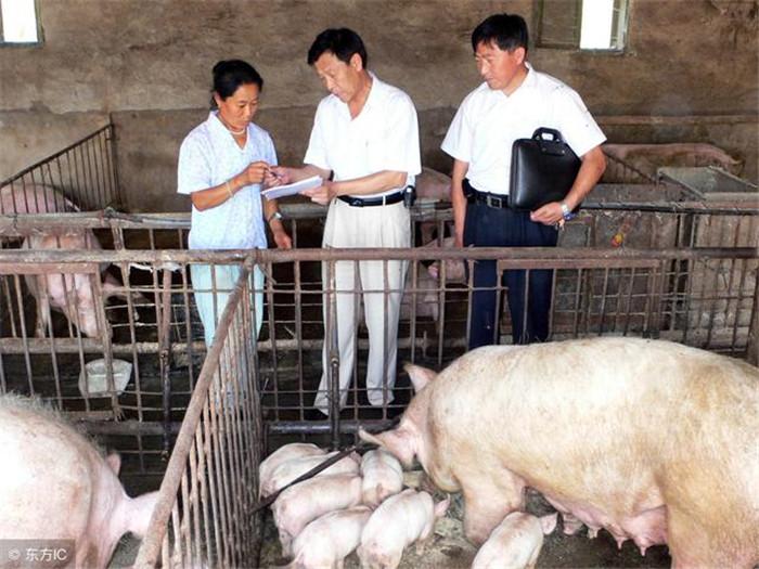 2018年,养猪人需要一份成熟的养猪