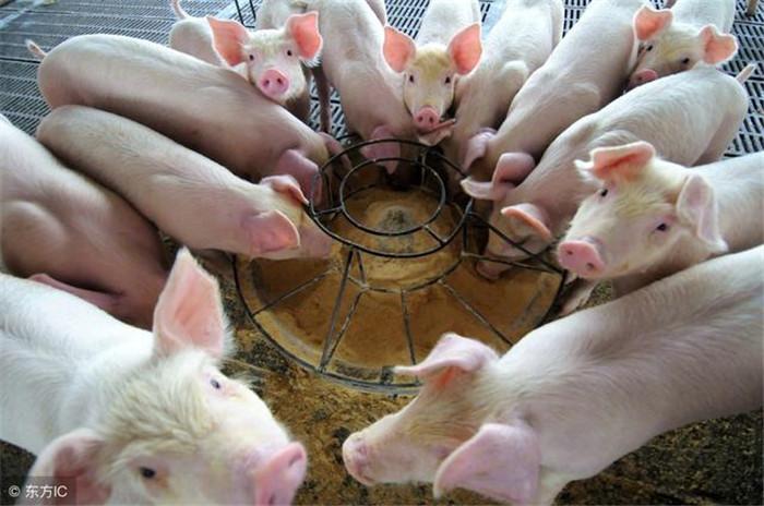 """2018年,养猪人需要一份成熟的养猪""""攻略""""!"""