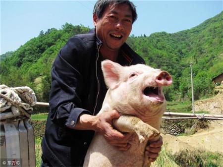 春季猪病防治应综合考虑各种因素