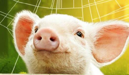 养猪3个新模式,不仅增加收入还环保,人和猪都快乐
