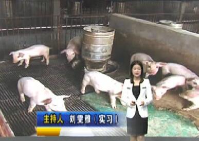 猪价下跌有点猛 养殖户直呼亏不起