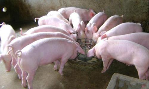 2018年03月17日全国外三元生猪价格行情涨跌表