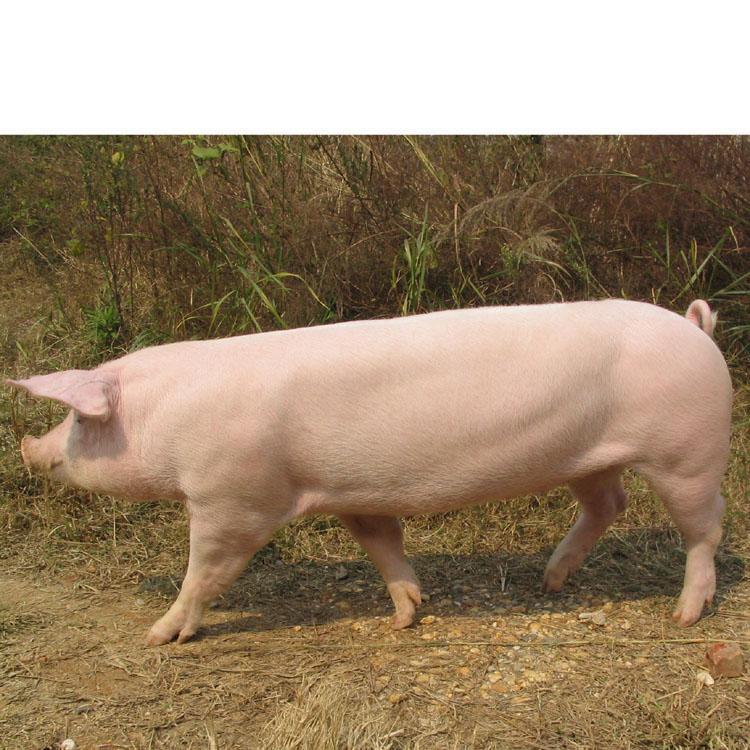 2018年03月18日全国内三元生猪价格行情涨跌表