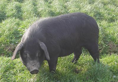 猪场的粪污资源化利用到底怎么评估?怎么才算合格?