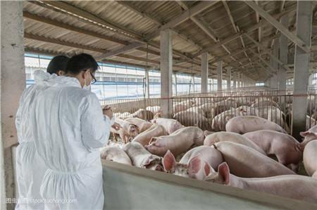 猪场的粪污资源化利用到底怎么才算合格?标准在这里