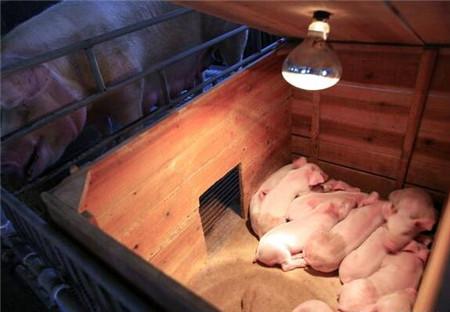 从财务角度看猪场成本控制如何做到最优,十分值得学习