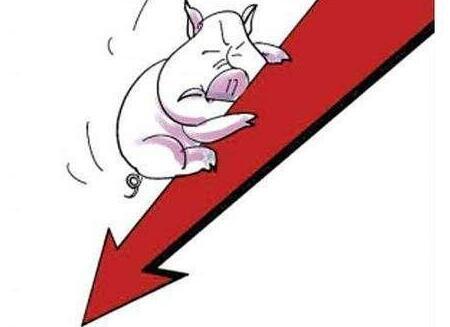 这场猪价暴跌,大型猪企是不是比小散更惨?