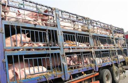 两养猪巨头一个卖猪圈,另一个不几天亏一百亿,养猪业还能干吗?