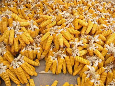 2018年03月21日全国玉米价格行情走势汇总