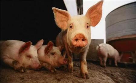 冯永辉:猪价逼近上轮猪周期最低点、跌破调控警戒线