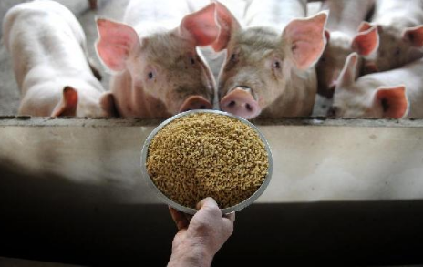 轰轰烈烈的养猪热过去了,吃亏的投机者现在怎么样了