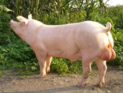 2018年03月22日全国外三元生猪价格行情涨跌表