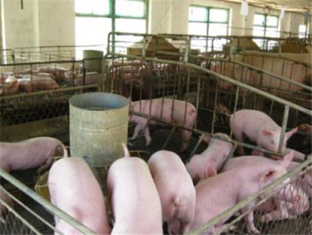 批次化生产是现代猪场的一种高效生产管理体系,也已被国内多数养殖集团公司陆续采用,部分理念先进的私营养殖企业也开始了批次化生产管理。如何才能做到批次化生产,目前能查到的资料已然不少,本文是我们在为猪场落实批次生产的一线服务中,对批次化生产实施时团队管理者需要做好哪些准备的简单介绍。