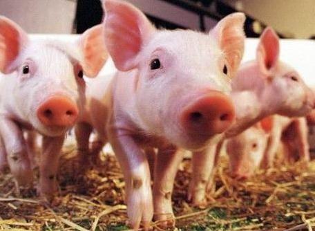 2018年3月24日(20至30公斤)仔猪价格行情走势