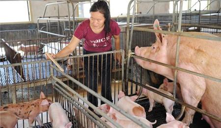 【小妙招】猪场除臭小妙招:改良饲料是关键!养猪人学起来~