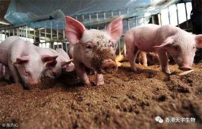 最近,走访养殖场户,约有70%的养猪场户手里面都有或多或少待售的育肥猪,他们都在等行情,每天都上网看猪价,焦虑心急如焚。
