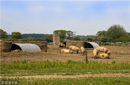 很多人都认为节后的猪价跌势出乎意料,其实这样在情理之中。业内人士认为这轮猪价下跌的最大问题是生产力度用大了。