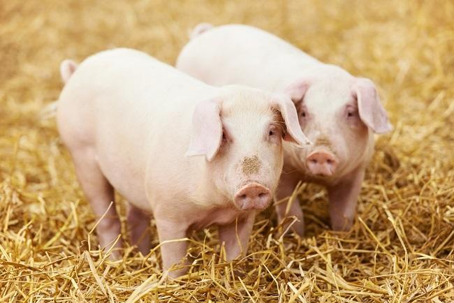 中信证券:猪价阶段性底部已至 看好二季度强反弹