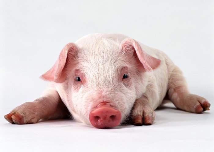 天兆猪业:在强化成本管控的道路上始终砥砺前行