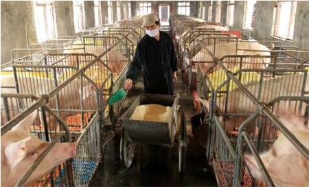 母猪便秘原因有哪些?真的能用蜂蜜治疗母猪便秘吗?