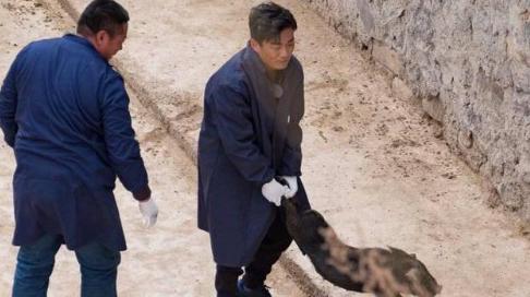 王宝强亲自养猪,竞选贫困村村长,下猪圈抓猪搞笑了... ...