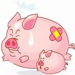 南方春季猪呼吸道疾病防控知多少?
