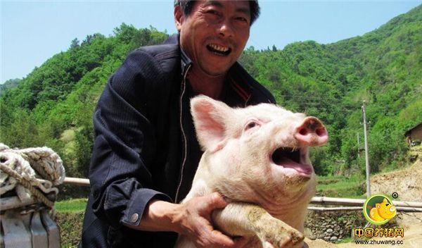 """6、猪与人好比君臣关系,猪是君,人是臣。正所谓伴君如伴如伴虎,一旦你不够用心、细心、耐心地对待它时,它就会""""判你的刑"""",让你付出代价。"""