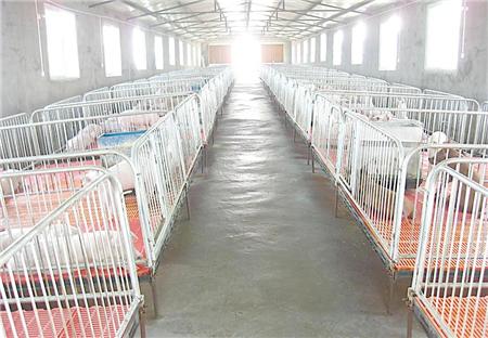 猪场20条管理经验 养猪人必须收藏!