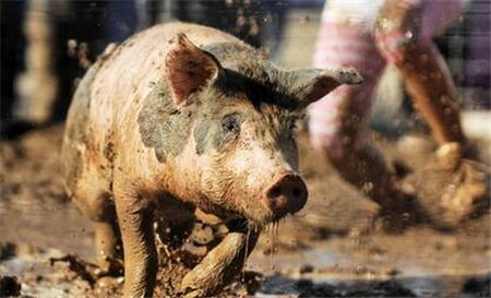 """禁抗""""政策频出台,看农牧企业如何把握先机?"""
