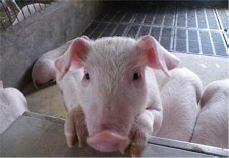 第三届(2018)东北养猪论坛暨东北猪业博览会