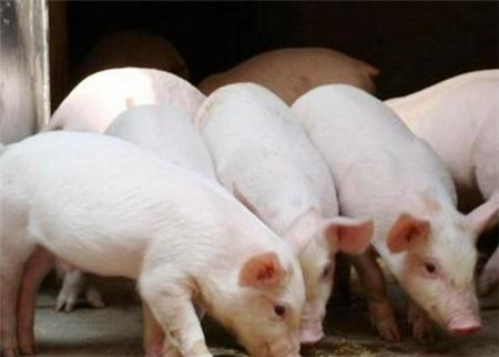 猪市行情有周期,这是谁也破解不了的魔咒。这次,猪价从春节前7元多雪崩式跌破5元,养猪人都在惊呼,这次猪周期不是猪价低迷了