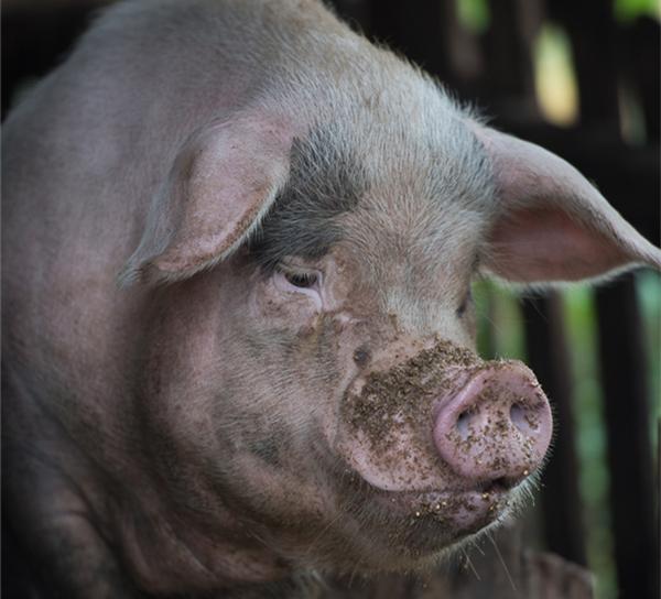 四川农村80岁老奶奶独居深山,自己种地养猪,和一只狗相依为命...