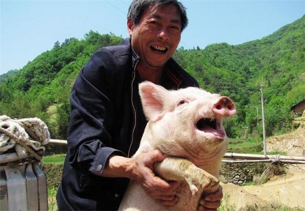 告诫!告诫!18年养猪,不亏本金就是赚!