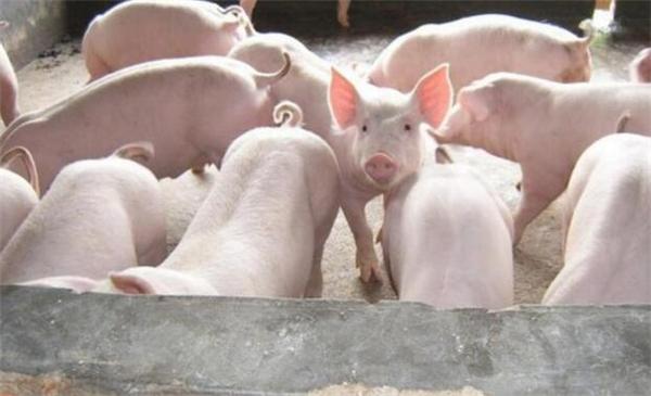 实拍:越南媳妇嫁到中国后,种田养猪,生活让人感慨!