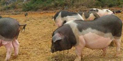 关停搬迁216个养殖场后,畜禽产量竟翻番了?