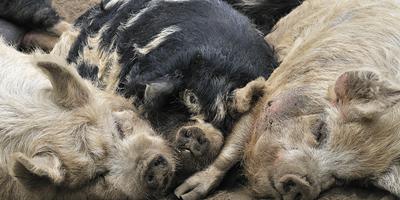 """互联网企业养猪养鸡 消费升级下更多""""外行""""跨界农业"""