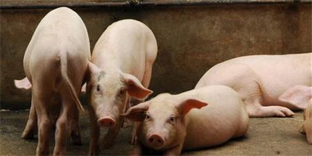 猪价涨不上去?农业农村部:主因是大型养殖企业产能扩张较快!