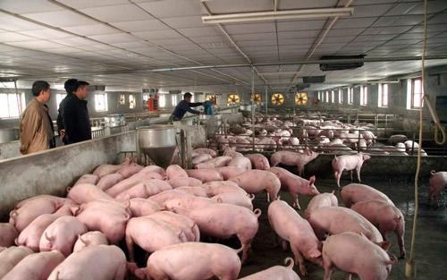"""""""新形势、新要求""""的洗礼 猪价下行的幅度也有限!"""